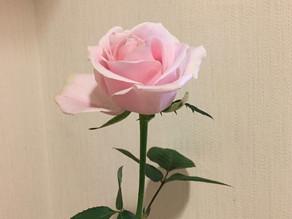 素敵なバラをいただきました