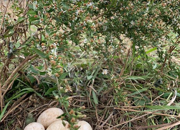 Heritage Duck Eggs, Organic