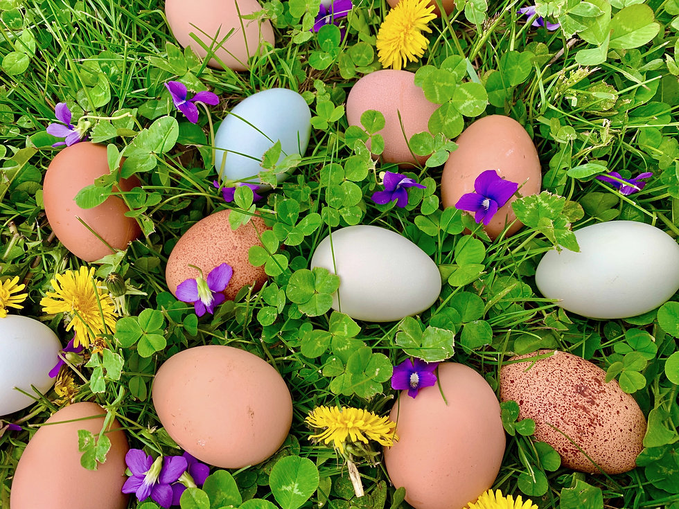 Eggs%20in%20Grass%20with%20Flowers_edited.jpg