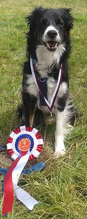 Competitve Dog Obedience