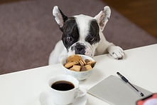 dog and biscuits.jpeg