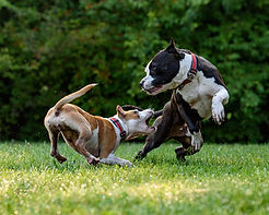 aggressive dog2.jpg