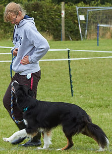 Heelwork for dog obedience