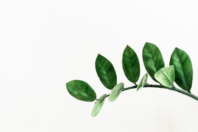 leaf vine.jpeg
