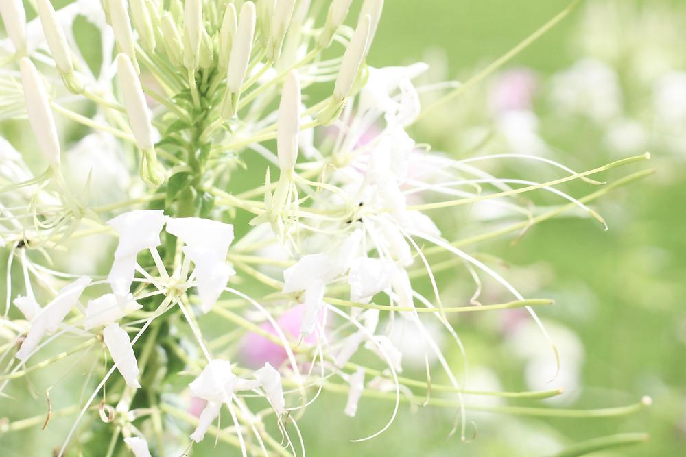 Blütenzauber auf der Landesgartenschau in Apolda