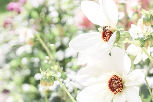 Blütenzauber zur Landesgartenschau in Apolda