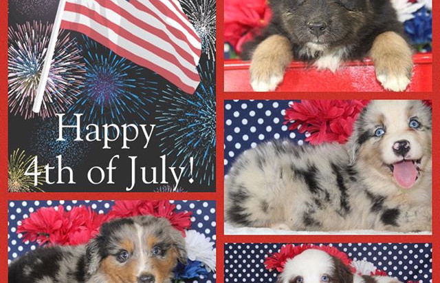 Wishing all of of 4 legged followers and their hoomans a safe and memorable 4th of July!