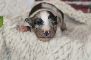 SOPHIE Stnd. Female AVAILABLE