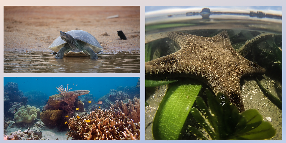Life Below Water: Conservation Efforts in Malaysia