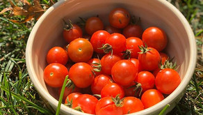 Good & Bad of eating Tomatoes