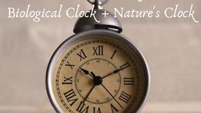 The Ayurveda Clock