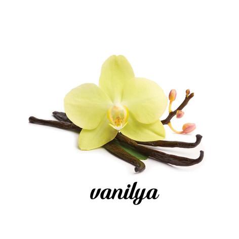 vanilya.jpg