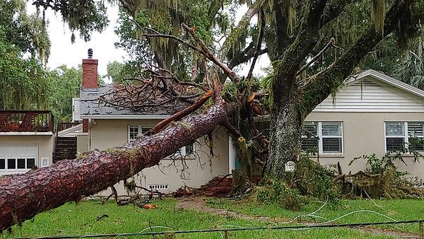 07-03-19 Tree On House 2_1562187494206.j