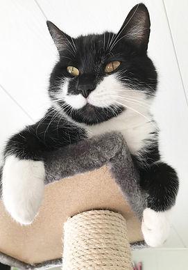 kissa-kiipeilee.jpg