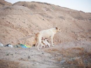 דנה דרויש: נפש חיה בי   ניר הראל: הר מיטה