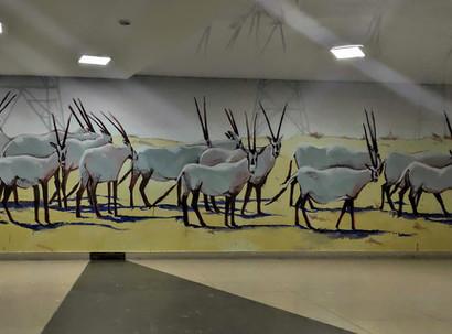 איגור מיקוצקי, אמגושא, נאו אפולוניה: עדר