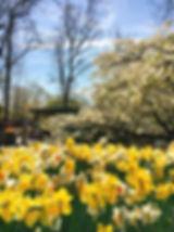 キューケンホフ公園,キューケンホフ,花,チューリップ,オランダ,アムステルダム,オランダ観光,日本人,ガイド,旅行,個人ガイド,ドライバー,観光,旅行,タクシー,移住,車,ツアー,チャーター,日本語,日本,