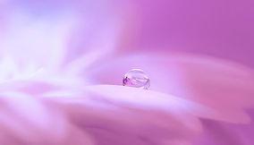 blossom-3054803_640.jpg