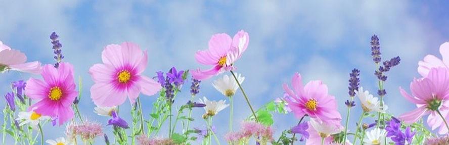 wild-flowers-571940_640_edited.jpg