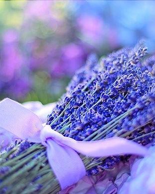 lavender-2482374_640.jpg