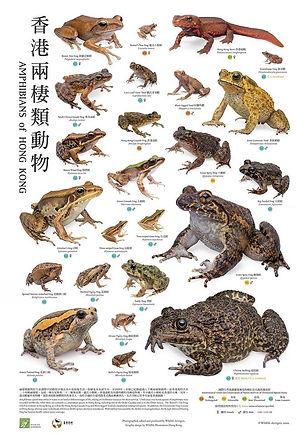 HK_Amphibians_poster.jpg