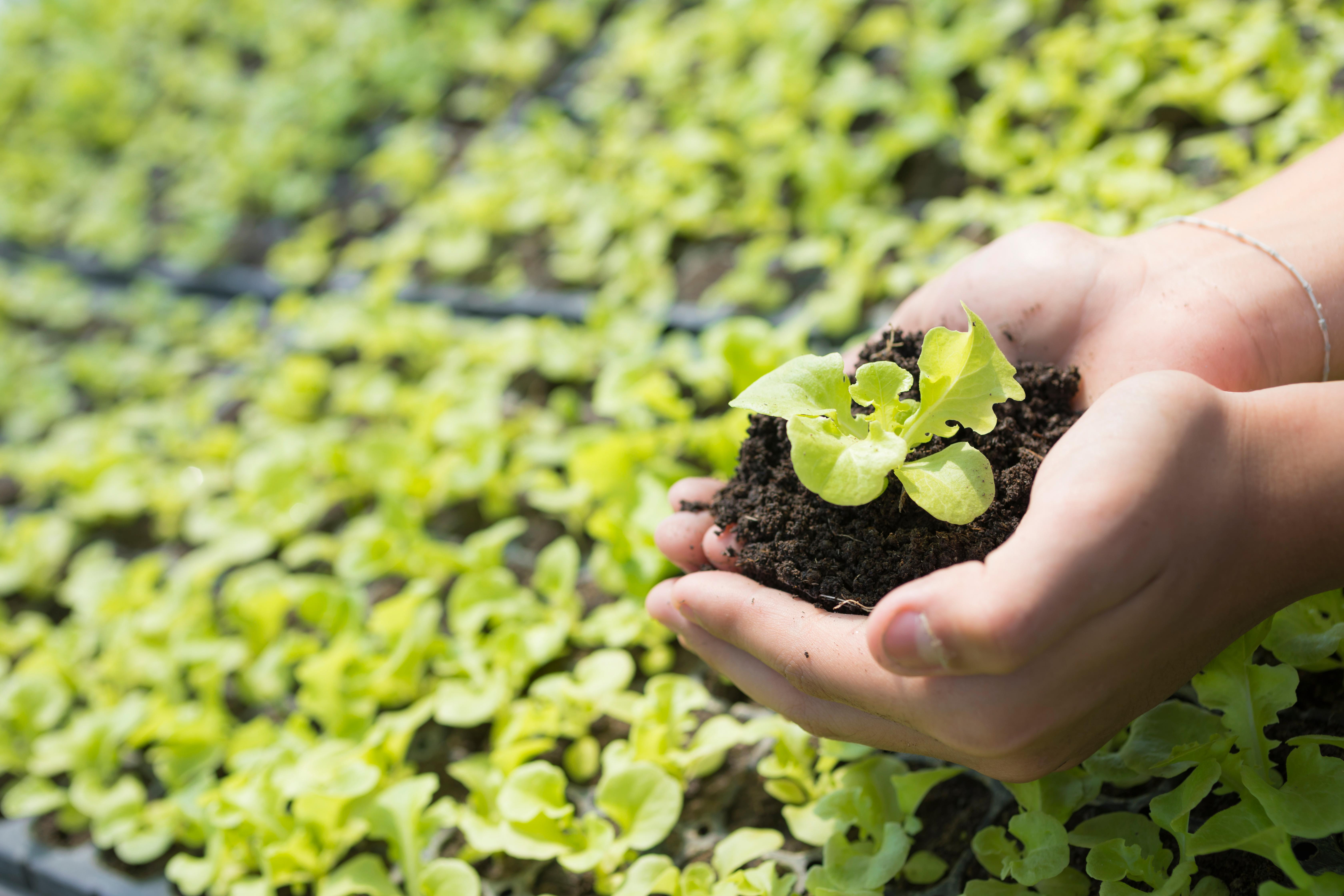 shutterstock_1243973587 - Seedlings.jpg