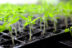 shutterstock_613446629 - seedling.jpg
