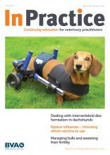 Veterinary management of the Dachshund with back problems