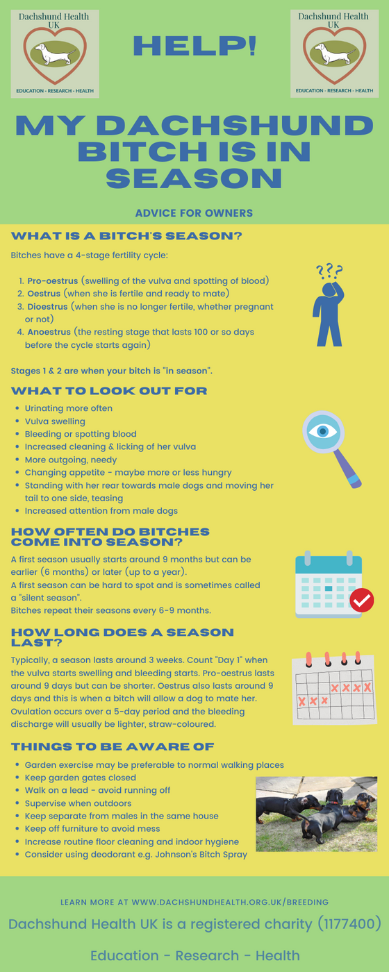 New infographic - My bitch is in season - help!