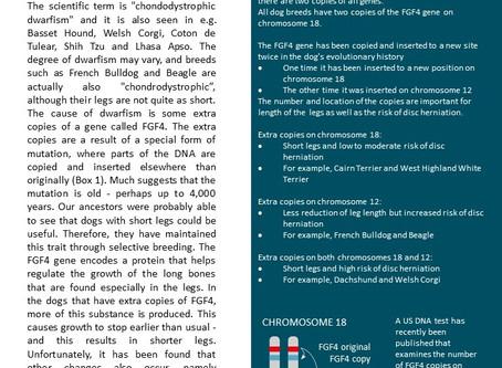 Danish article on IVDD in short-legged breeds
