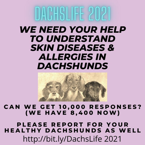 DachsLife 2021 - can we get 10,000 survey responses?