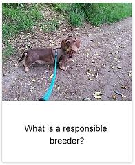Responsible_breeder.png