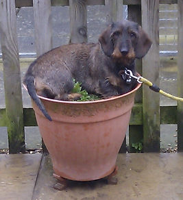 Pola in flowerpot 2.jpg