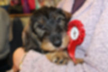 Puppy with rosette.JPG