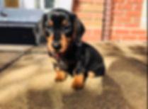 MS puppy.jpg