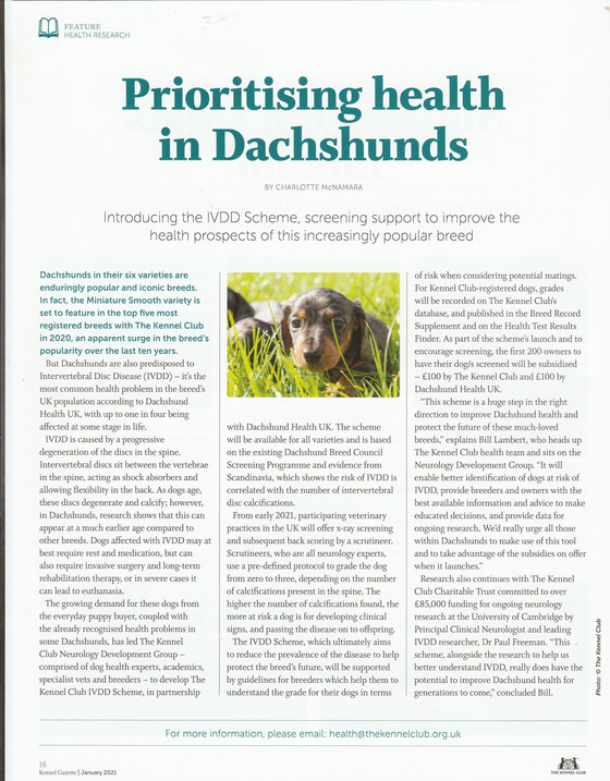 Prioritising health in Dachshunds - introducing the IVDD scheme supported by the Kennel Club