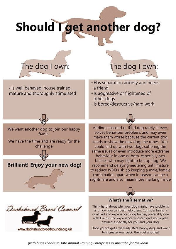 Should I get another dog poster v2s.jpg