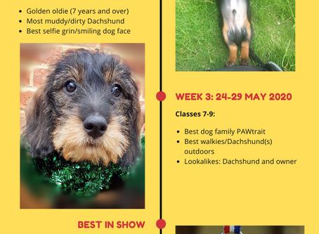 Online Fun Dog Show raising funds for Dachshund Health UK