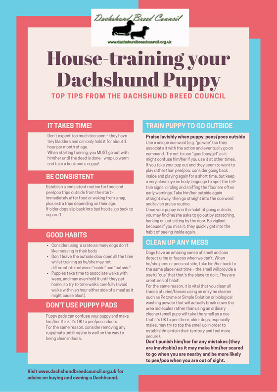 Toilet-training your Dachshund - our top tips