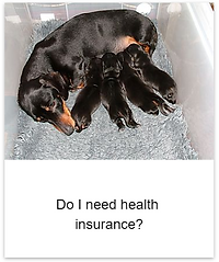 Insurance_need.png