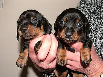 2 MS pups.jpg