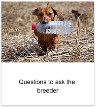 Questions_to_ask.png