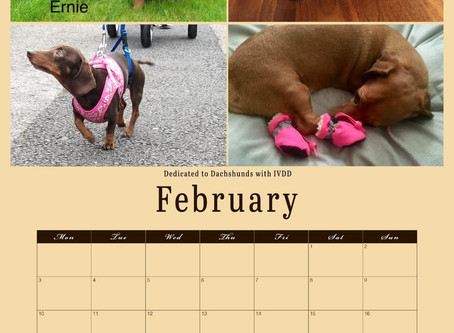 """2020 Calendars in support of """"Dedicated to Dachshunds with IVDD"""" - get yours now"""