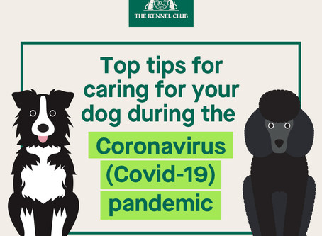 KC advice for dog owners during the Coronavirus pandemic