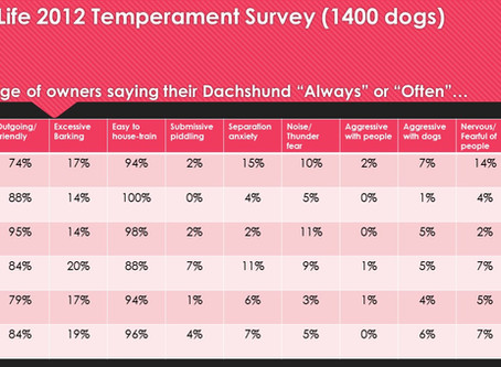 Dachshund temperaments - what are they like to live with?