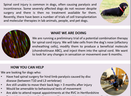 Stem cell research project for dogs paralysed by IVDD