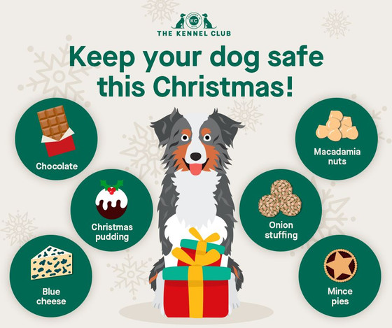 Keep your dog safe at Christmas - advice from the Kennel Club