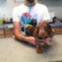 Natalie Carr's standard pup at vet.jpg
