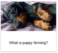 Puppy_farming.png