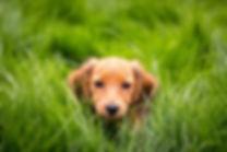 ML Puppy.jpg